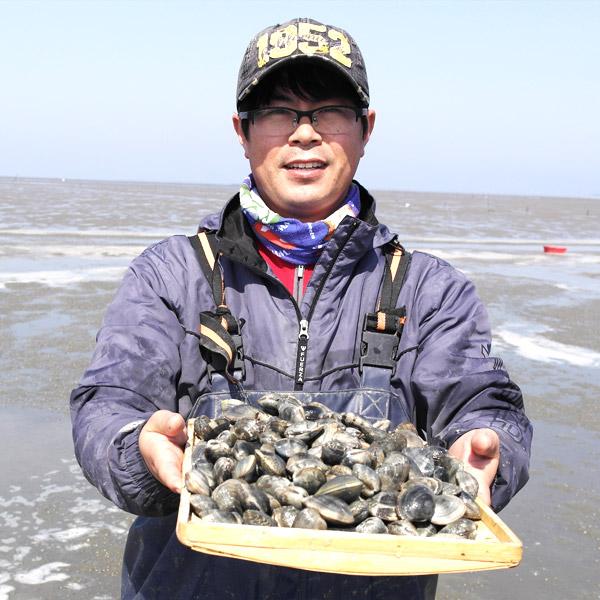 [고창 하전 산지직송] 해감된 갯벌 참 바지락 5kg(실중량)