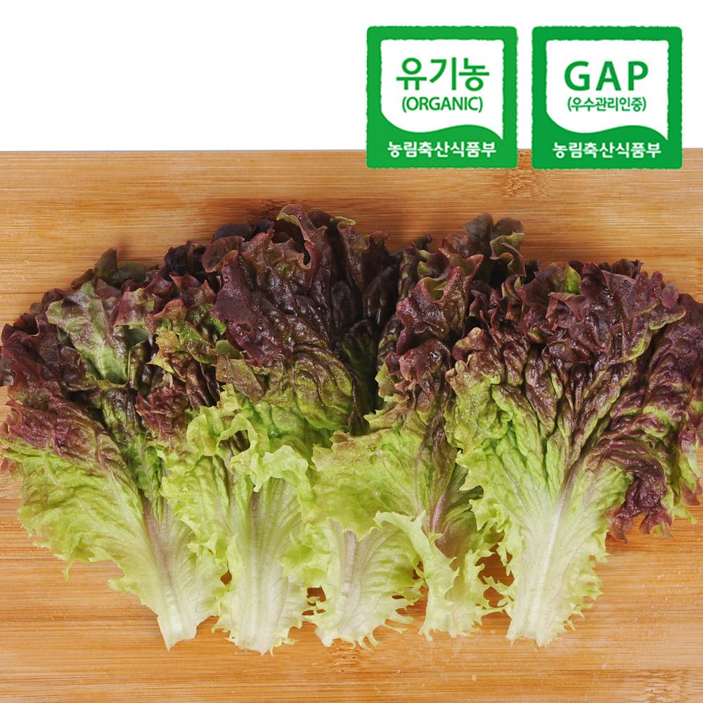 [산지직송] 유기농 적상추 800g