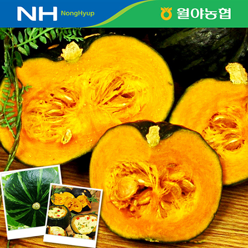 [함평월야농협] 미니 밤호박 4kg (12과/개당 300~400g)