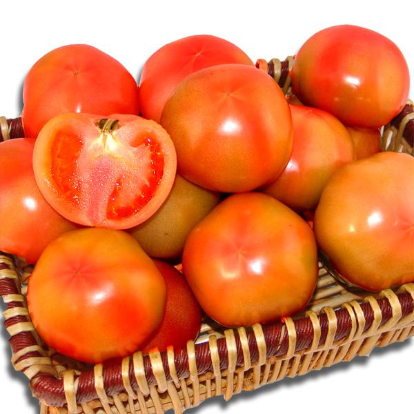 탱탱한 완숙 토마토 3kg 내외(3~5번과)